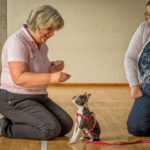 Puppy School Tutor at Puppy Classes