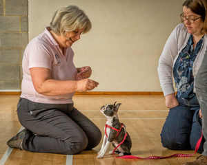 Puppy School Tutor at Puppy Classes